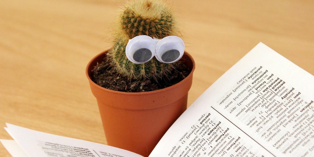 кактус з очима